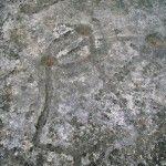 Petroglifos del Cenajo (Parte II)